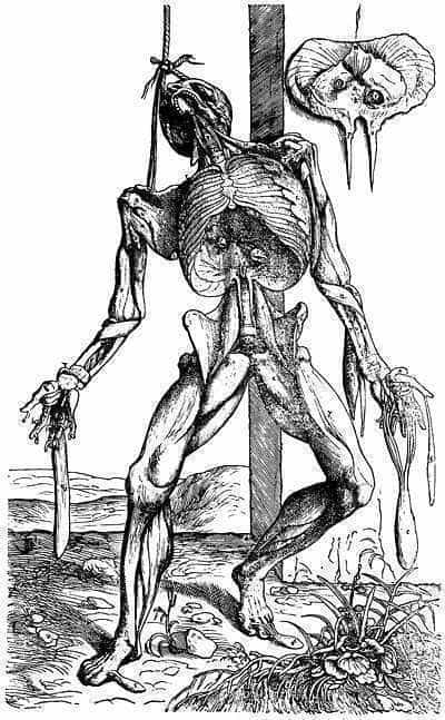 Anatomy book illustration by Andreas Vesalius, 1555.