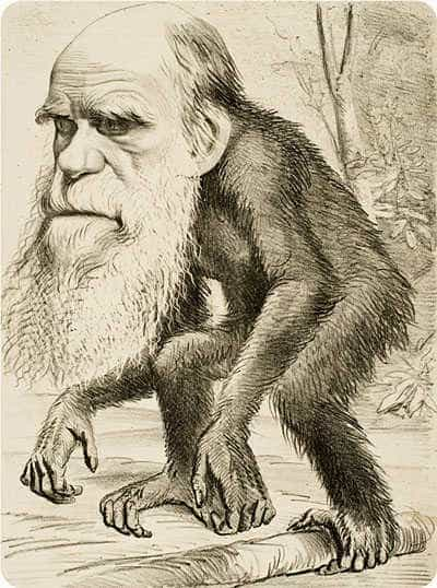 Editorial cartoon from The Hornet of Charles Darwin as an ape, 1871.