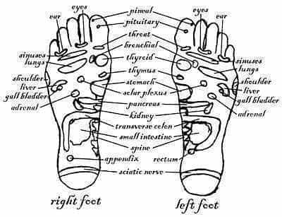 Zone therapy (reflexology) map.